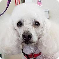 Adopt A Pet :: Sonny - La Costa, CA