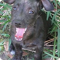 Adopt A Pet :: A - MICHELLE - Raleigh, NC