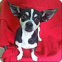 Adopt A Pet :: Tiny - Shreveport, LA