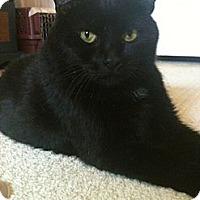 Adopt A Pet :: Beauty - Jenkintown, PA