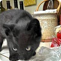 Adopt A Pet :: Enoch (responds to Edith) - Scottsdale, AZ