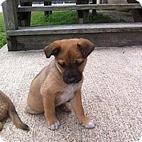 Adopt A Pet :: BOBO - Glastonbury, CT