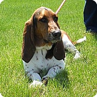 Adopt A Pet :: Brody - Barrington, IL