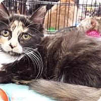 Adopt A Pet :: Jocelyn - Harrisburg, NC