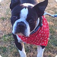 Adopt A Pet :: MOE ( speical needs) - North Augusta, SC