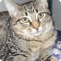 Adopt A Pet :: Peanut - Waupaca, WI