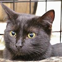 Adopt A Pet :: Polly - Grand Blanc, MI