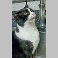 Adopt A Pet :: DeeDee - Pittsboro, NC