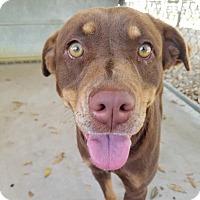 Adopt A Pet :: Sissy - Umatilla, FL