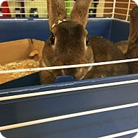 Adopt A Pet :: Floppy - Red Wing, MN