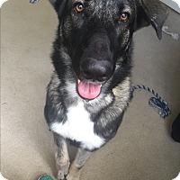Adopt A Pet :: JERRY - Odessa, FL
