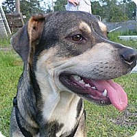 Adopt A Pet :: Sparkle - Graceville, FL