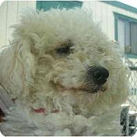 Adopt A Pet :: Brody - La Costa, CA