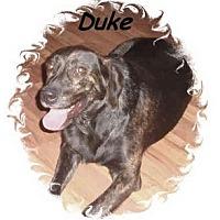 Adopt A Pet :: Duke - Irvington, KY