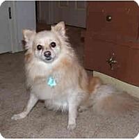 Adopt A Pet :: Peaches - Chesapeake, VA