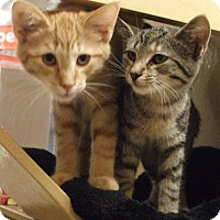 Adopt A Pet :: Bentley and Tabs - Colmar, PA