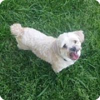 Adopt A Pet :: Max - Bedminster, NJ