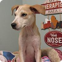 Adopt A Pet :: Rondi Reed - Groton, MA
