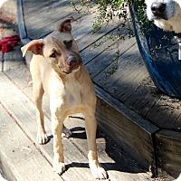 Adopt A Pet :: Clover - Groton, MA