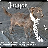 Adopt A Pet :: Jaggar - Plano, TX