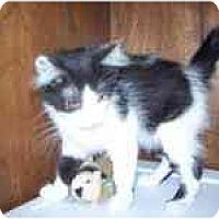 Adopt A Pet :: Kaboodle - Grand Rapids, MI