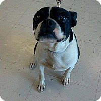 Adopt A Pet :: Sparkplug - Jacksboro, TN