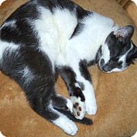 Adopt A Pet :: Sixer - Columbus, OH
