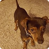 Adopt A Pet :: Speedy - Lakeville, MN