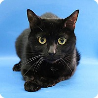 Adopt A Pet :: Blackie - Overland Park, KS