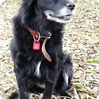 Adopt A Pet :: Sizzle - Saskatoon, SK