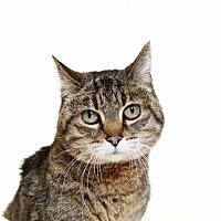 Adopt A Pet :: Agate - Truckee, CA