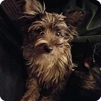 Adopt A Pet :: KYRA - Mission Viejo, CA