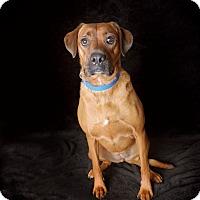 Adopt A Pet :: Lido - Van Nuys, CA