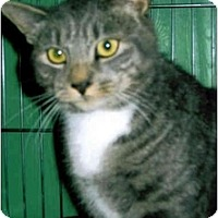 Adopt A Pet :: Charlie - Medway, MA