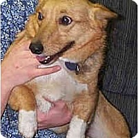 Adopt A Pet :: Ruby - Inola, OK