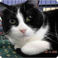 Adopt A Pet :: Slater - Riverside, RI