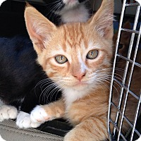Adopt A Pet :: Chesney - Irvine, CA