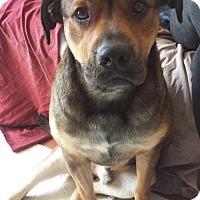 Adopt A Pet :: OSCAR - Cornwall, ON