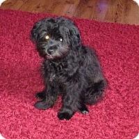 Adopt A Pet :: Charlie 4 - richmond, VA