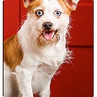 Adopt A Pet :: Perry - DRD graduate - Owensboro, KY