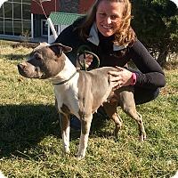 Adopt A Pet :: Dynasty - Urgent! - Zanesville, OH