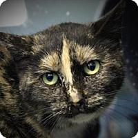 Adopt A Pet :: Zaya - West Des Moines, IA