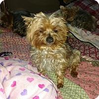 Adopt A Pet :: Pip - san diego, CA