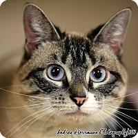 Adopt A Pet :: Angel - East Hartford, CT