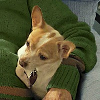 Adopt A Pet :: Chico is loving & well behaved - Redondo Beach, CA
