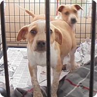 Adopt A Pet :: Jed - Jamestown, TN