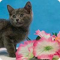 Adopt A Pet :: Frank - Houston, TX