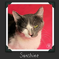 Adopt A Pet :: Sunshine - Indianapolis, IN