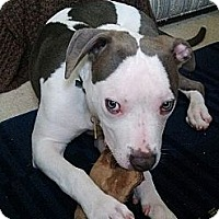 Adopt A Pet :: Eddie - Auburn, CA