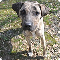 Adopt A Pet :: Marble - Winnsboro, SC